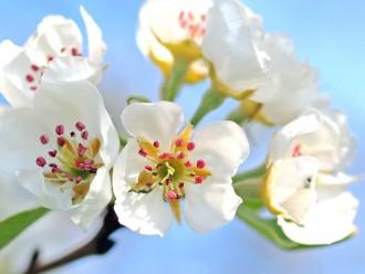 Zorgvuldig-snoeien-doet-bloeien